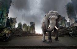 被毁坏的城市和大象 库存照片