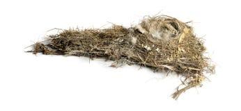 被毁坏的干燥鸟巢,被隔绝 免版税库存照片