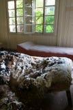 被毁坏的床 库存照片