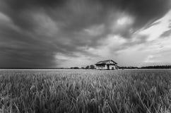 被毁坏的摒弃木房子周围的稻田 免版税库存图片