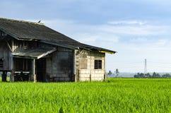 被毁坏的摒弃木房子周围的稻田 图库摄影