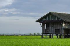 被毁坏的摒弃木房子周围的稻田 免版税库存照片