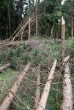被毁坏的森林风暴 库存图片