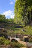 被毁坏的森林 库存照片