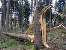 被毁坏的结构树 免版税库存照片