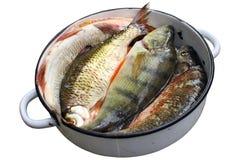 被毁坏的鱼新鲜 免版税库存照片