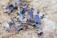 被毁坏的蝴蝶家庭 库存图片