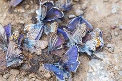 被毁坏的蝴蝶家庭 免版税库存图片
