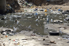 被污染的区 免版税库存照片