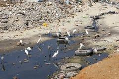 被污染的区 库存照片