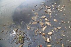 被污染的岸线(黑海滩由于污染) 免版税库存照片