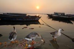 被污染的河Ganga 免版税库存照片