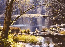 被污染的湖在森林里 免版税库存图片