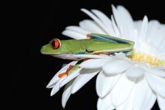 被注视的花青蛙红色结构树 库存照片