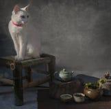 被注视的蓝色猫 免版税库存照片