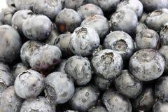 被洗涤的蓝莓特写镜头 免版税库存图片