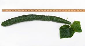 被测量的英国黄瓜 免版税图库摄影