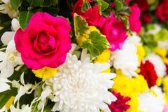 被混合的桃红色玫瑰 免版税库存图片