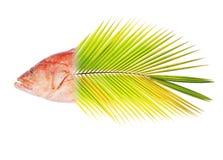 被混和的红被结合的石斑鱼 免版税库存照片