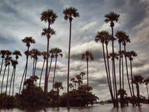 被淹没的棕榈 免版税库存照片