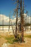 被淹没的结构树 库存照片