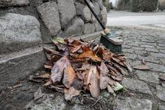 被清扫的叶子堆  免版税库存图片