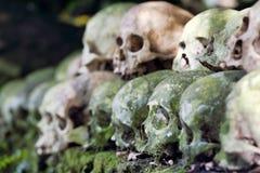 被清洗的头骨被堆积在一棵榕树下在公墓根据anciant印度传统在Trunyan,巴厘岛 免版税库存图片