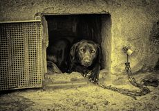 被滥用的狗 免版税库存照片