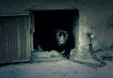 被滥用的狗 库存照片