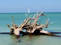被漂白的树海滩03 免版税库存照片