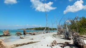 被漂白的树海滩01 库存照片