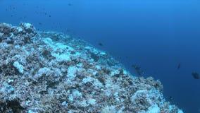 被漂白的珊瑚 影视素材