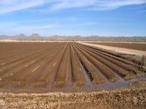 被灌溉的农田 免版税库存图片