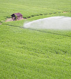 被灌溉的领域 库存图片