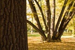 被点燃的公园结构树 库存图片