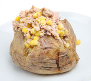被烘烤的土豆金枪鱼 库存照片