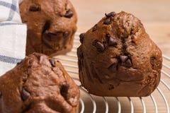 被烘烤的巧克力松饼 免版税图库摄影