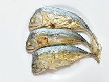 被烘烤的泰国鲭鱼有背景 库存照片