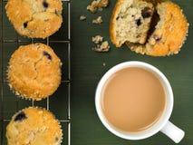 被烘烤的蓝莓和蔓越桔松饼 免版税图库摄影