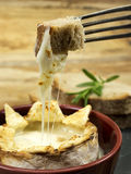 被烘烤的软制乳酪 免版税库存图片