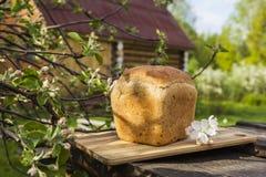被烘烤的面包 免版税图库摄影