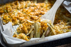 被烘烤的茴香用巴马干酪 库存照片