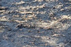 被烧清除庄稼残滓领域的特写镜头视图 免版税库存照片