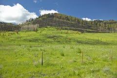 被烧焦的山坡和新春天成长在百年谷, Lakeview, MT 库存照片