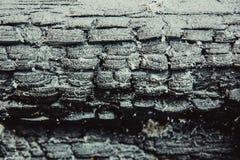 被烧焦的木头纹理  免版税库存照片
