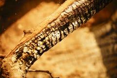 被烧焦的木头 图库摄影