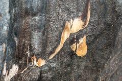 被烧焦的木日志 房子杉树日志的墙壁 烧了 概念性背景围住木材 模式 库存图片