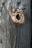 被烧焦的木头和枝杈。 免版税库存图片