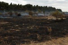 被烧焦的草和灌木在森林火灾以后 免版税库存图片