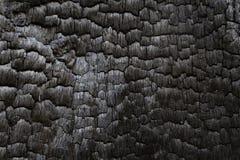 被烧焦的黑木日志内部在森林火灾烧了 免版税图库摄影